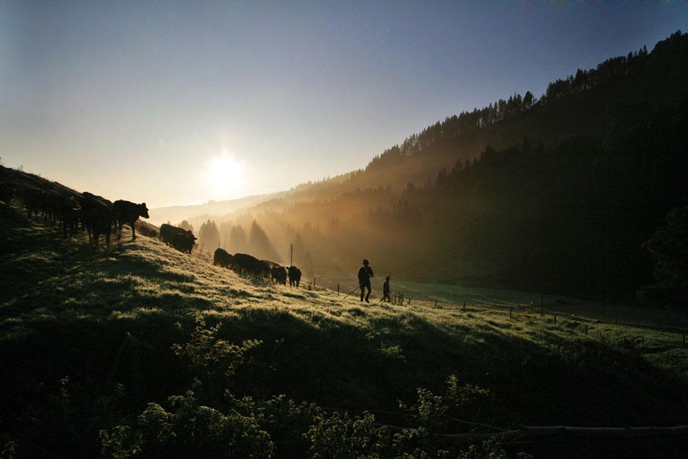 Viehscheid in den Bergen: Interview mit einem Immenstädter Älpler 3