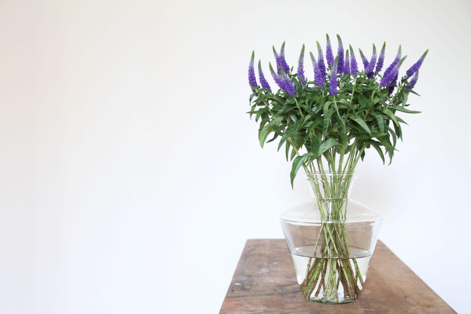 Welche Vase für welche Blume? 1
