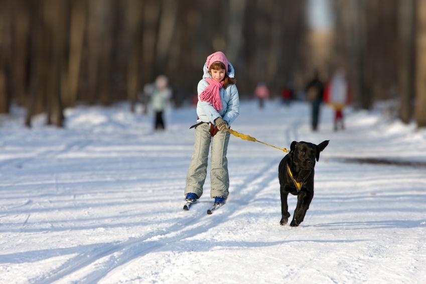 Tipps für den Winterurlaub mit Hund 3