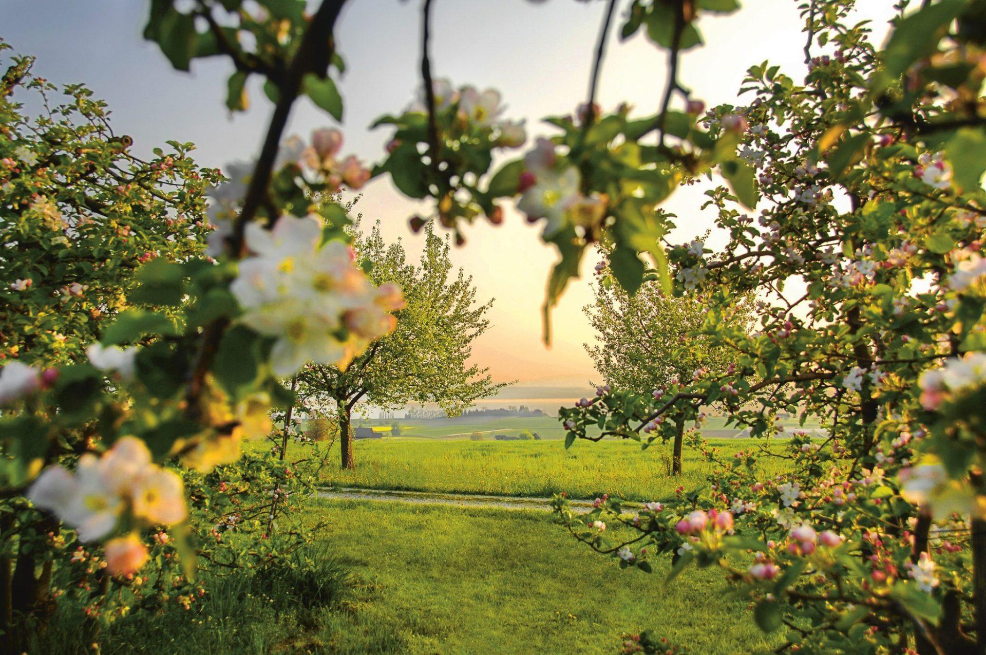 Bodensee im Blütenrausch 7