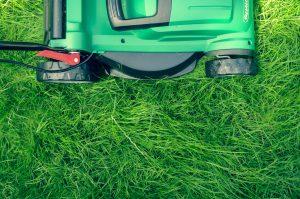 Wie wird der Rasen richtig vertikutiert? 1